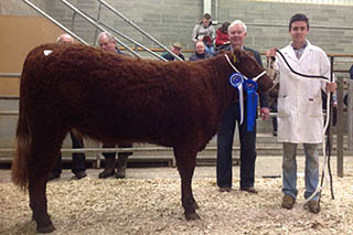 2014 Show & Sale, Reserve Female Champion, Sligo Mere and Niall Hunt.