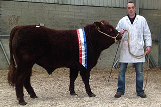 2014 Show & Sale Male Champion. Carrentubber Norway, owner David Kirrane.