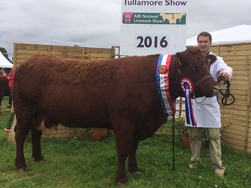 National Livestock Show Champion Clew Bay Kate
