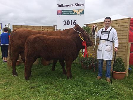 tullamore_show_2016_1st_male_calf_sligo_pierre_owner_niall_hunt