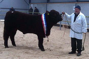 SHOW & SALE REPORT 14th November 2015.